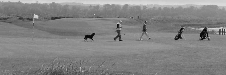 We enjoy golf freely.